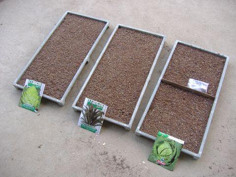 各種アブラナ科野菜種まき