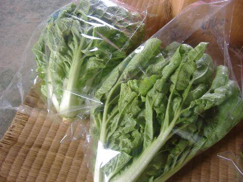 サラダ白菜