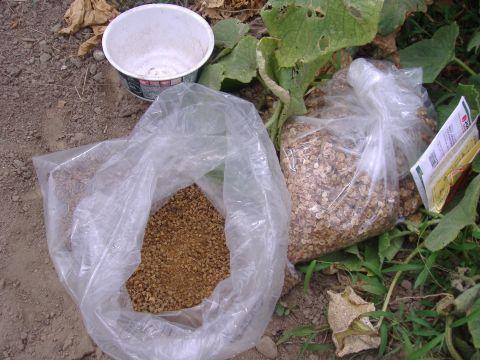パースニップ&ビーツ播種