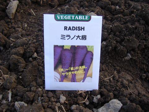 各種種蒔き