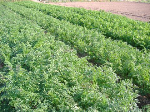 肥料の効果