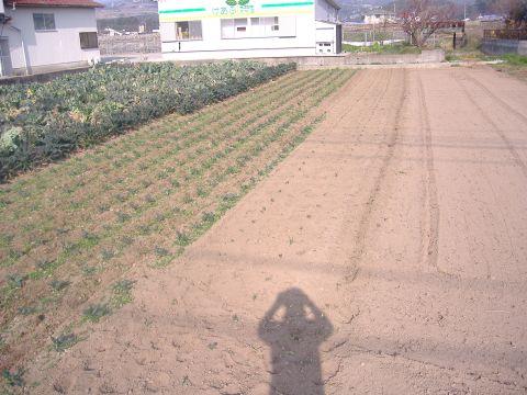 カーボロネロ定植
