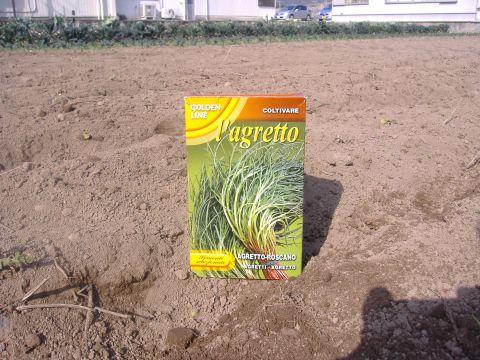 アグレッティ種蒔き