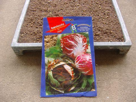 冬野菜播種