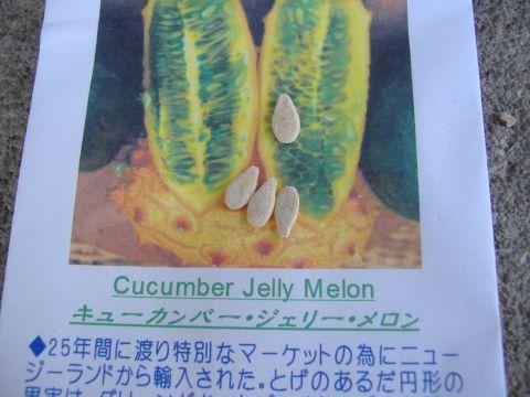ジェリーメロン播種