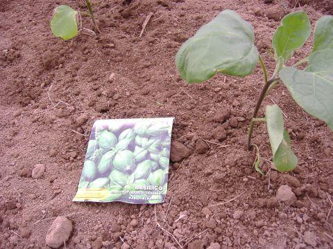 ナス定植&バジル播種