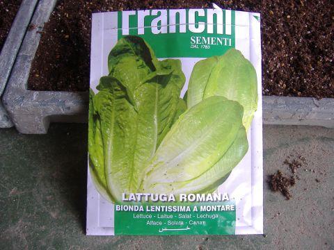レタス播種