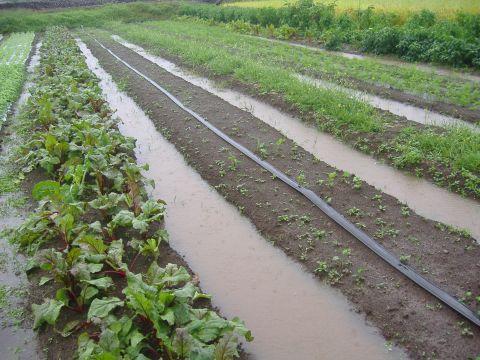 各種移植&長雨